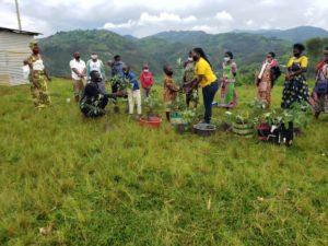 Obstbaumsetzlinge für Kinderfamilien in Ruanda